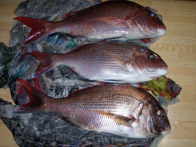 KEIKOさん真鯛釣り 018
